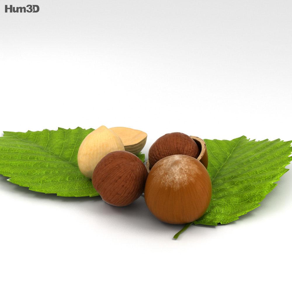 Hazelnut 3d model