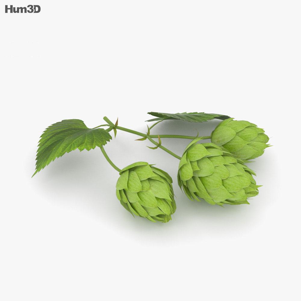 Hops 3d model