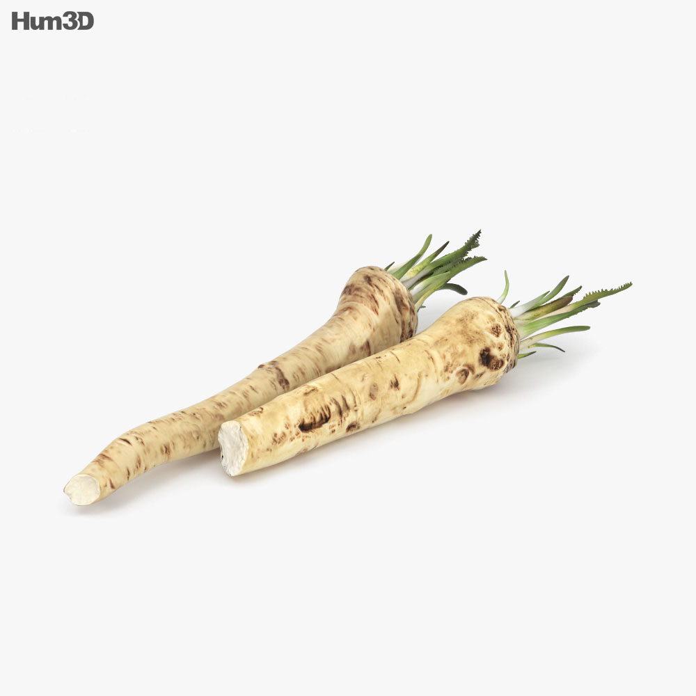 Horseradish 3d model