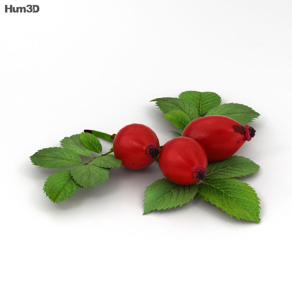 Rose Hip 3d model
