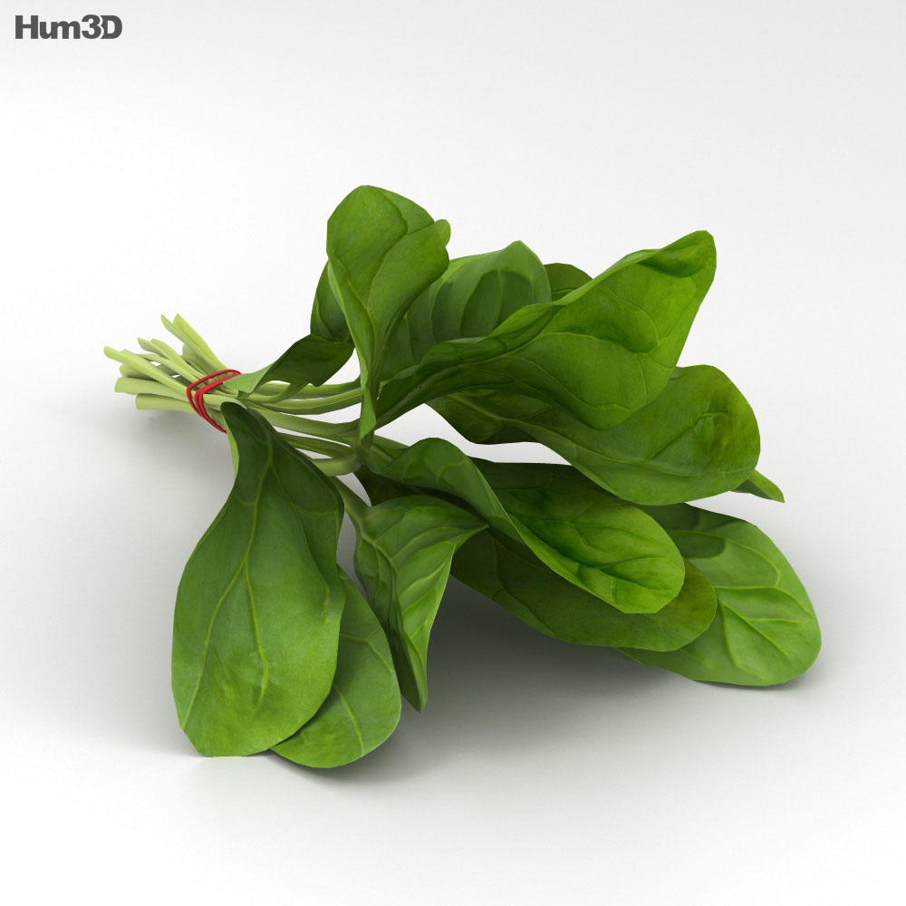 Spinach 3d model