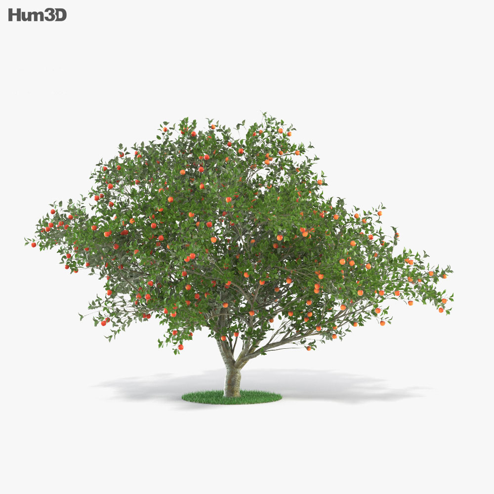 3D model of Apple Tree