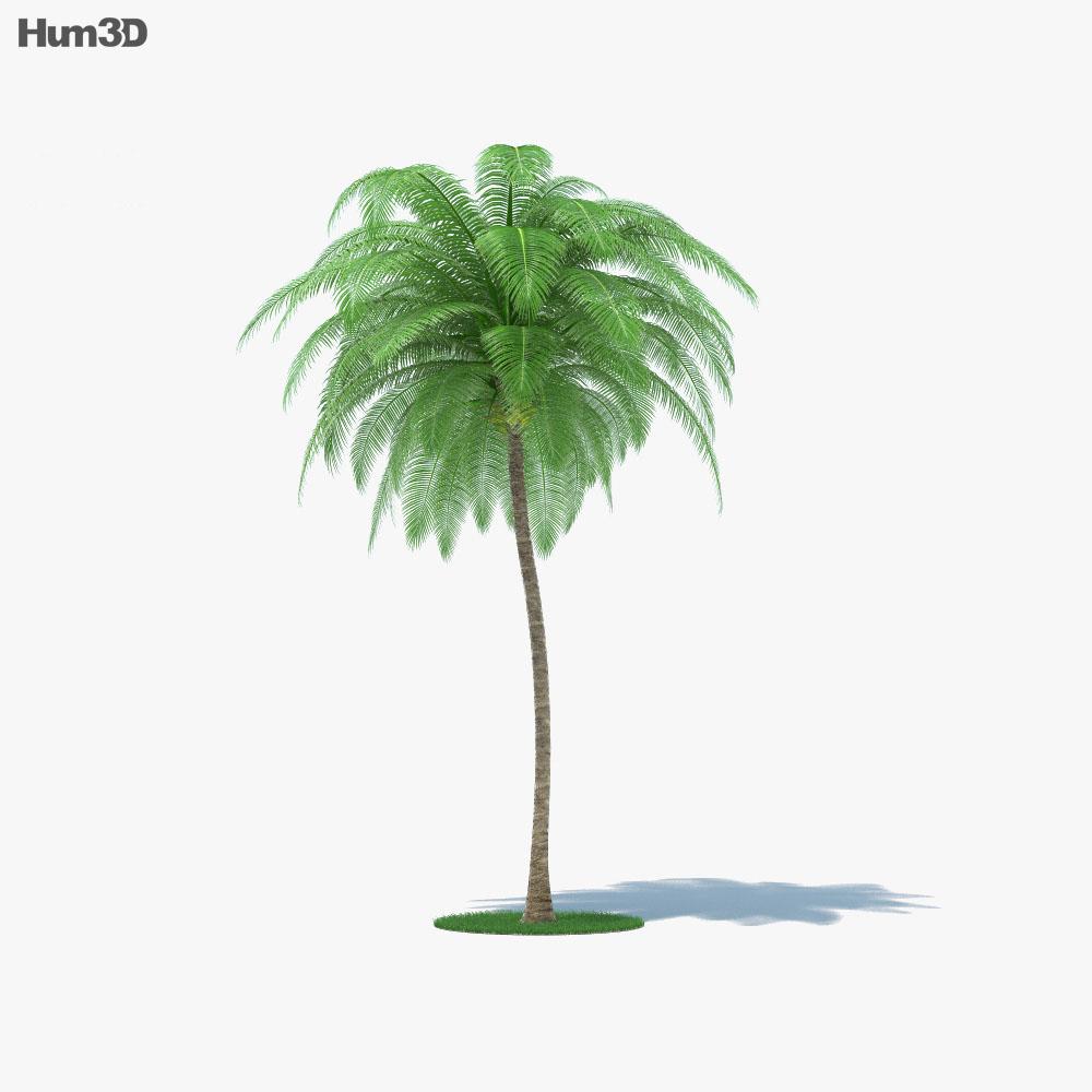 Coconut Palm 3D model