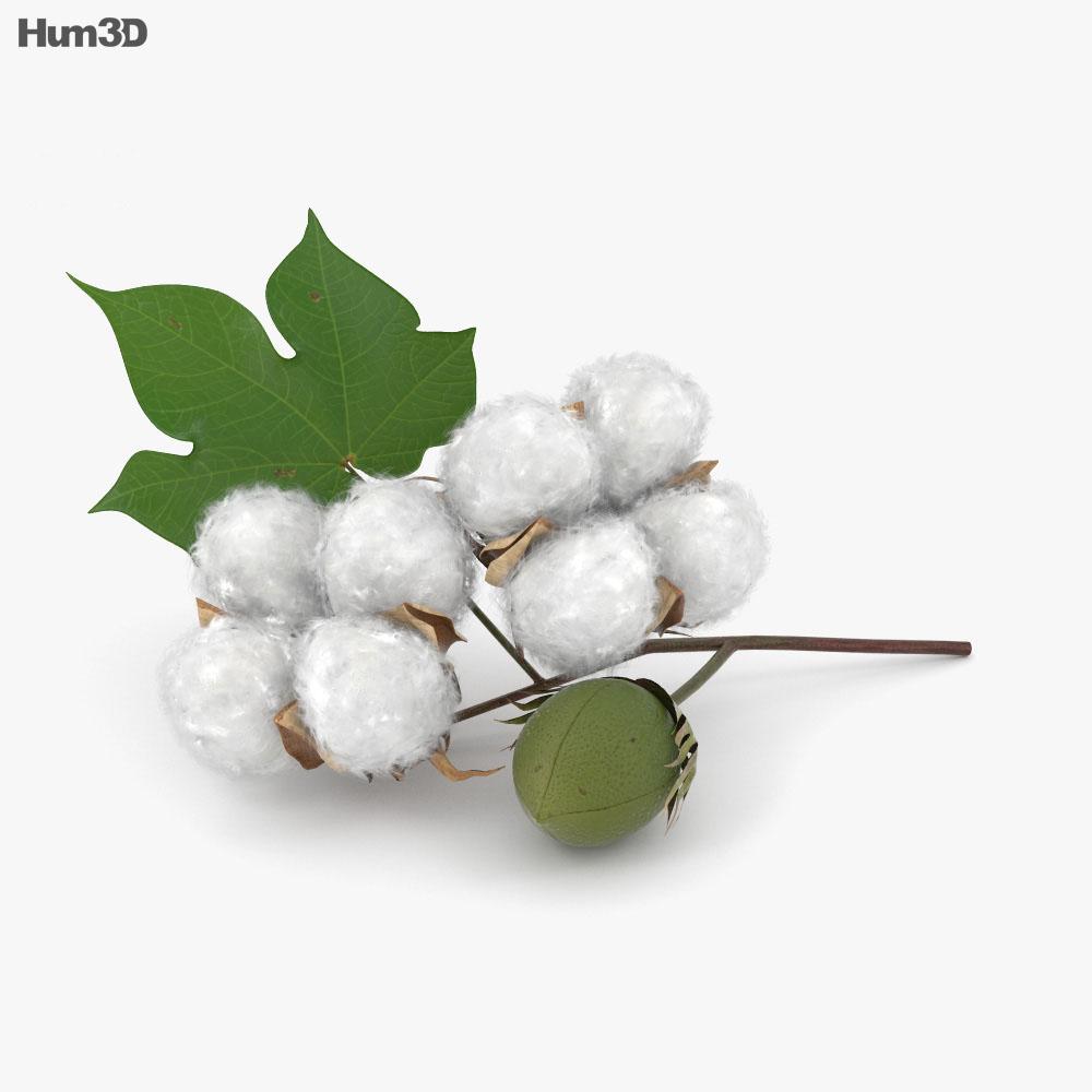 Cotton 3d model