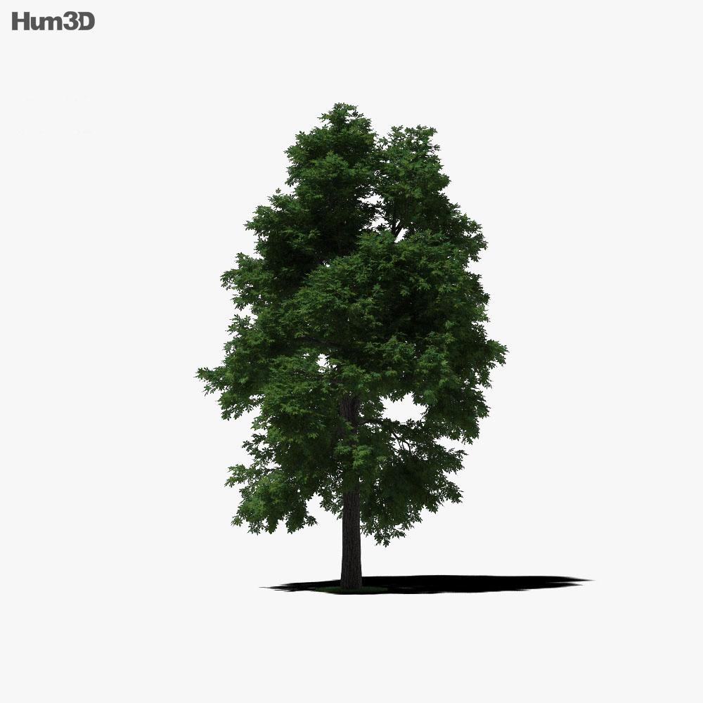 Hickory 3d model