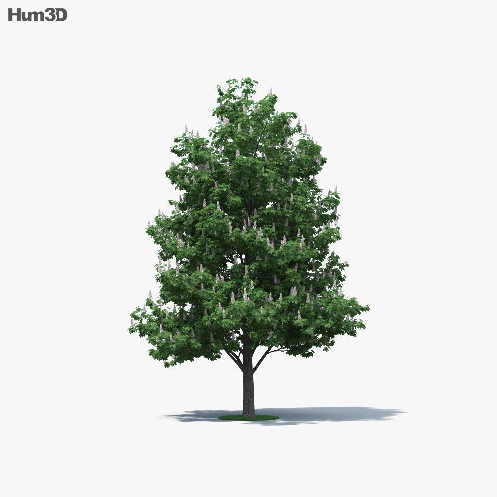 Horse Chestnut 3d model