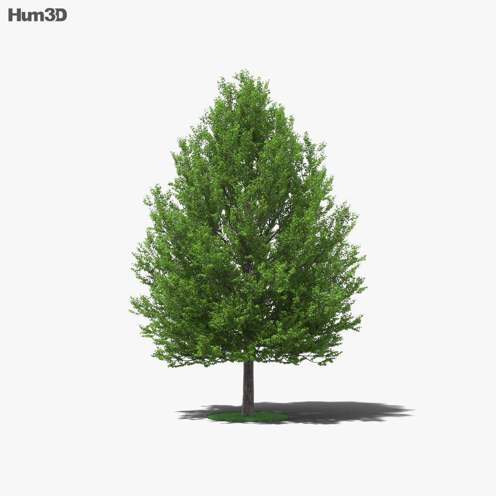 Linden Tree 3d model