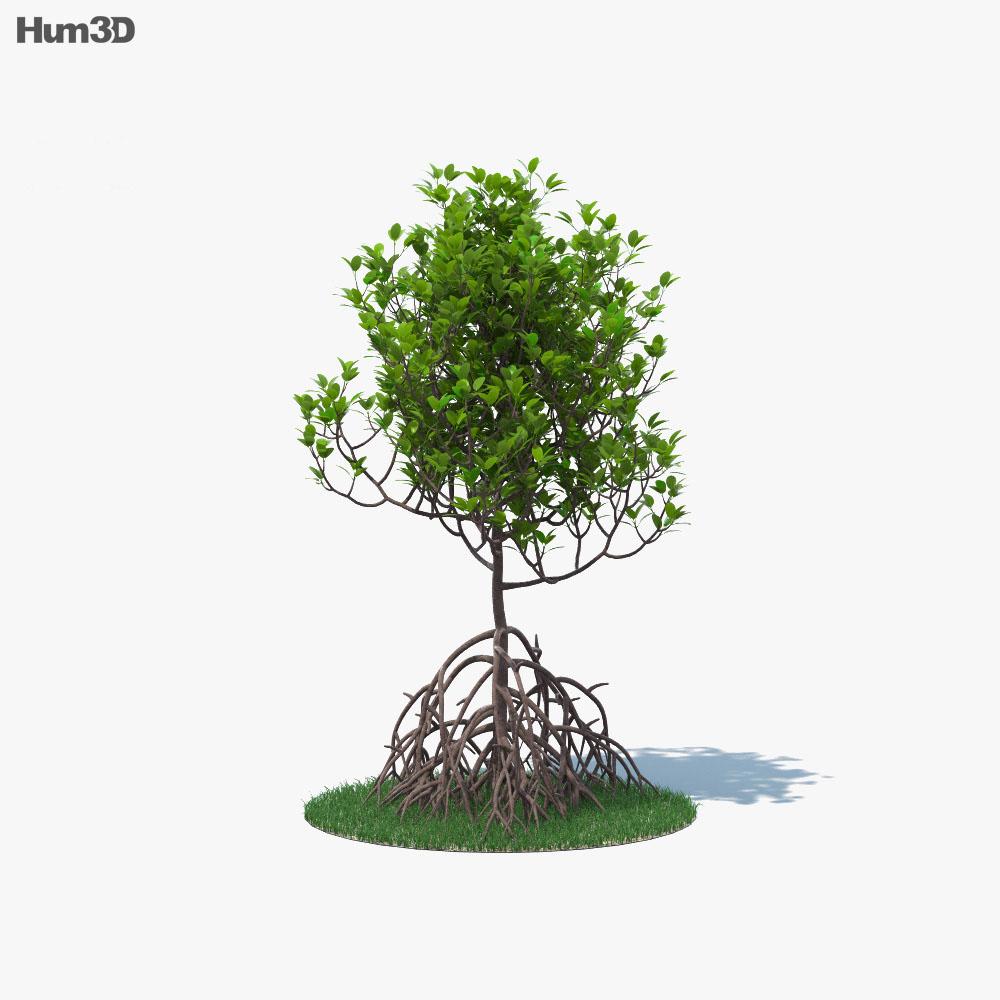 Mangrove 3d model