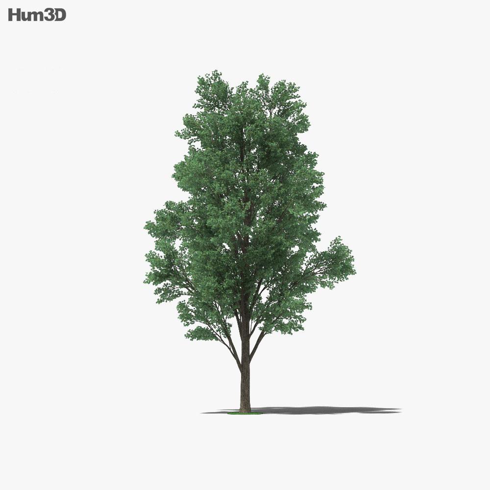 Cottonwood 3d model