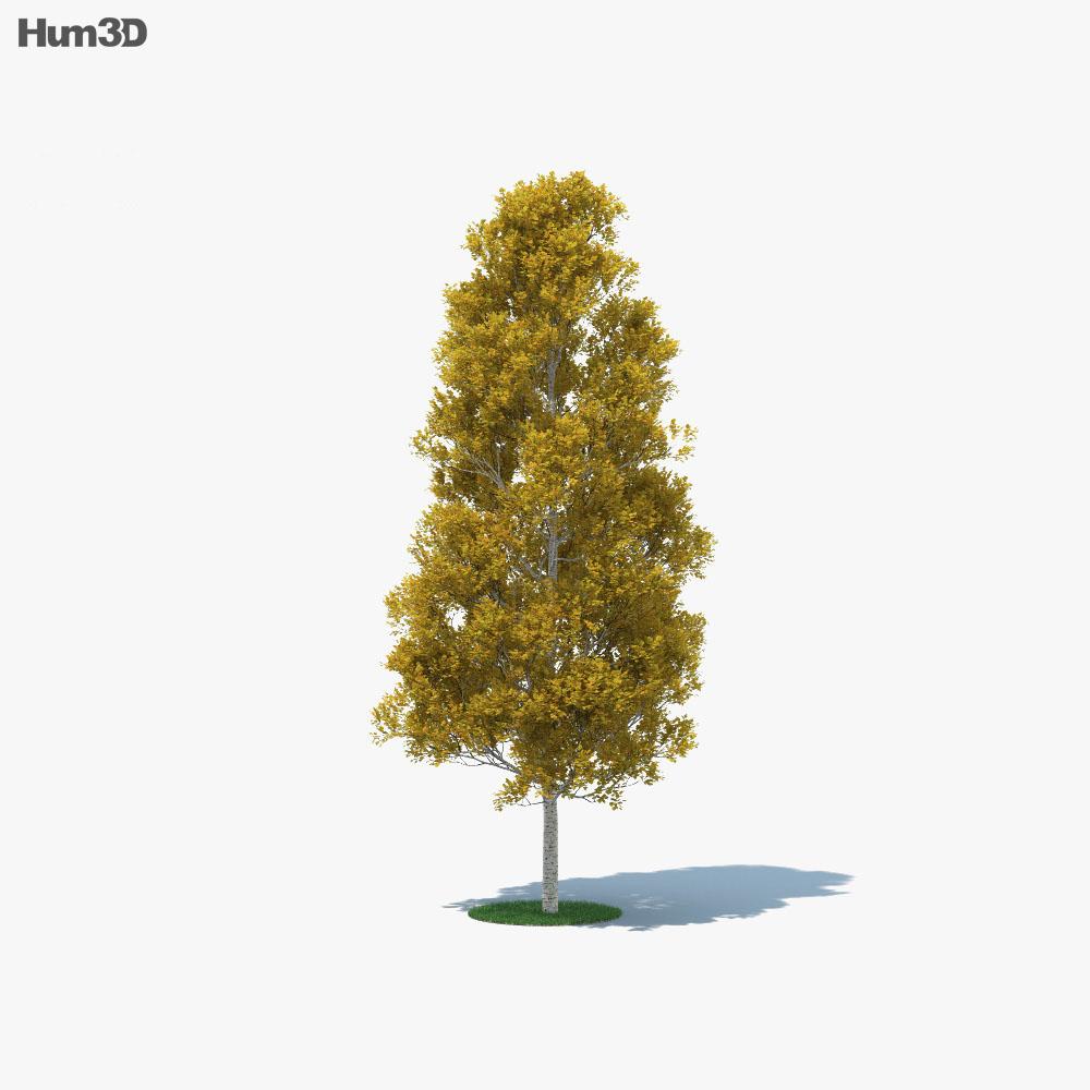 Quaking Aspen 3d model