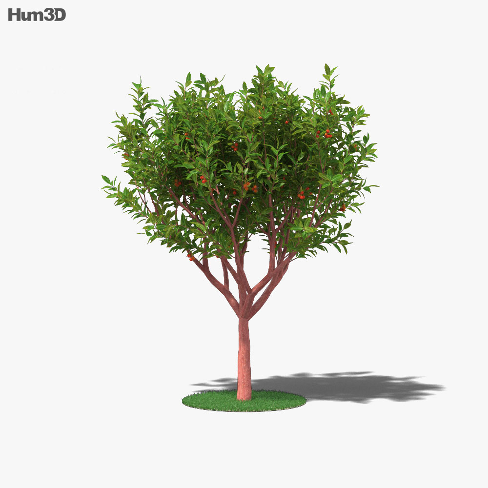 Strawberry Tree 3d model