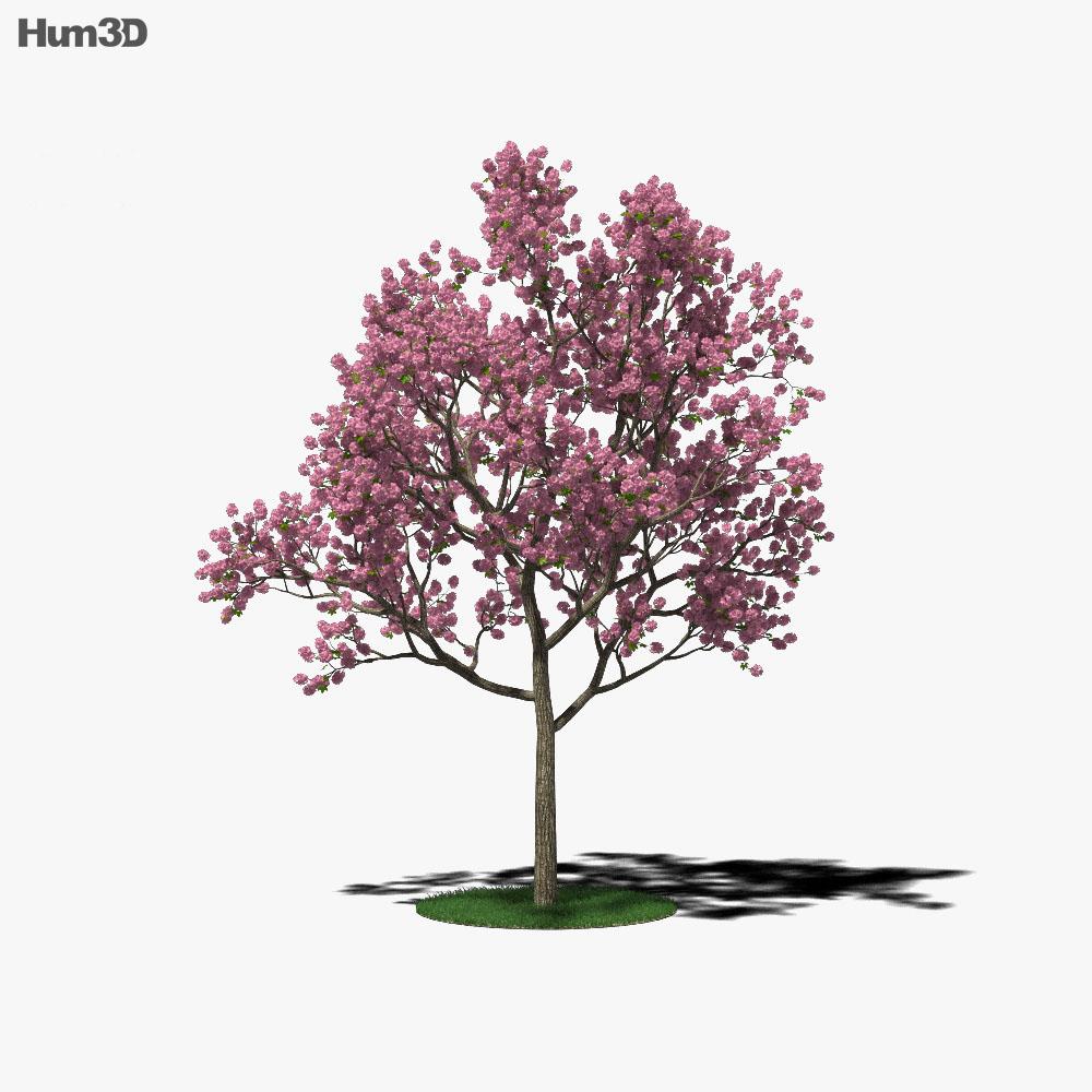 Tabebuia Rosea 3d model