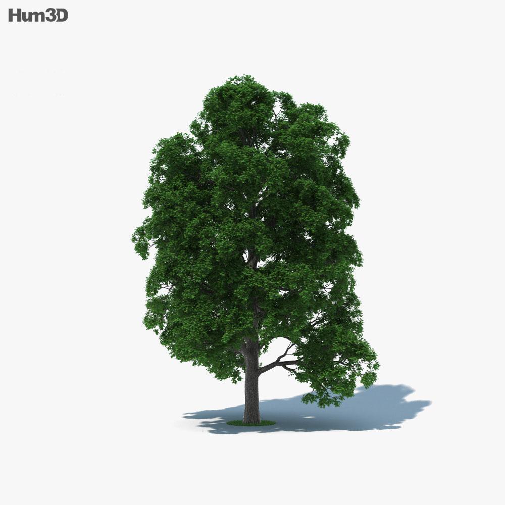 White Oak Tree 3d model
