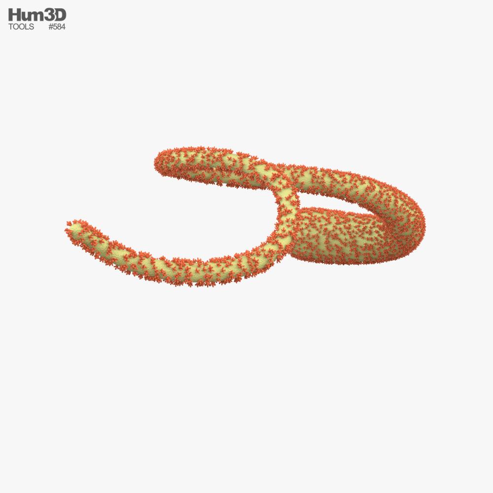 Ebola Virus 3d model
